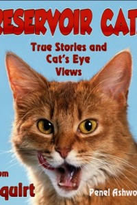 Bargain eBook Hunter: We Hunt for FREE & Bargain eBooks So You Don't Have To! -- A HotZippy Website: Today's Readers for Tomorrow's Bestsellers! © -- Bargain eBook Hunter proudly presents: Reservoir Cats: True Stories and Cat's Eye Views from Squirt by !